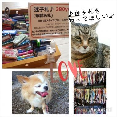 PhotoGrid_1411011216519.jpg