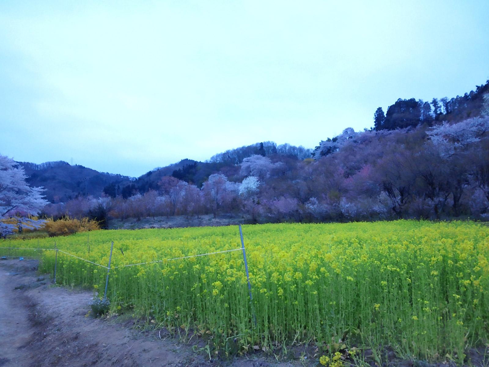 20140419_hanamiyama.jpg