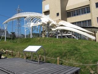 道の駅和田浦 クジラの標本