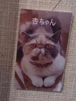 ねこまる茶房にて201410110011