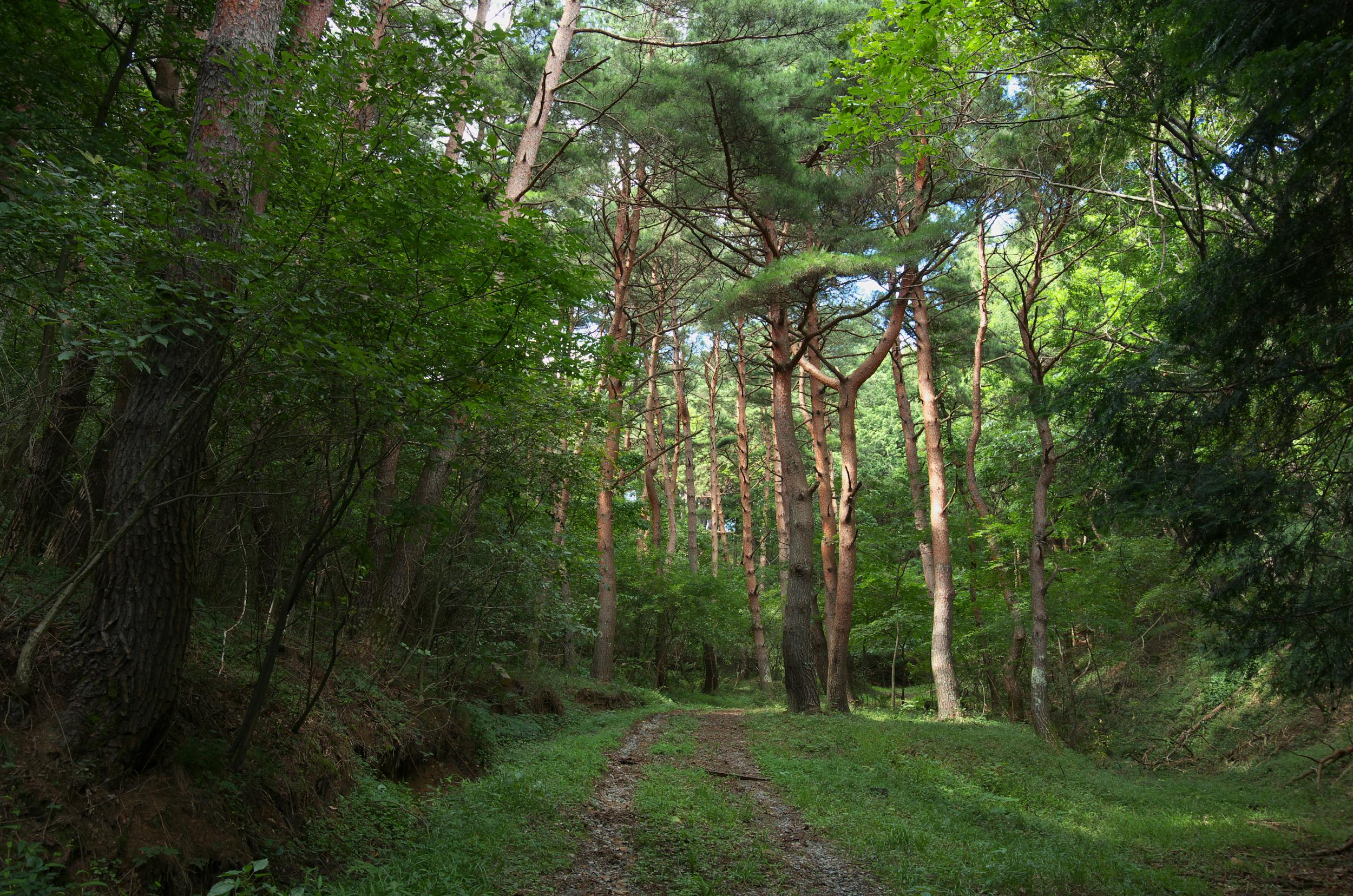 きのこの森6