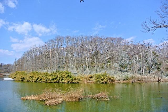 武蔵丘陵森林公園 (2)