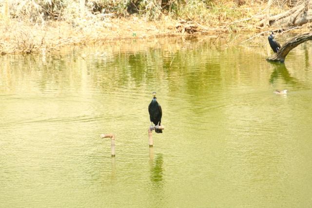 武蔵丘陵森林公園 (4)