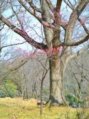 武蔵丘陵森林公園 (8)