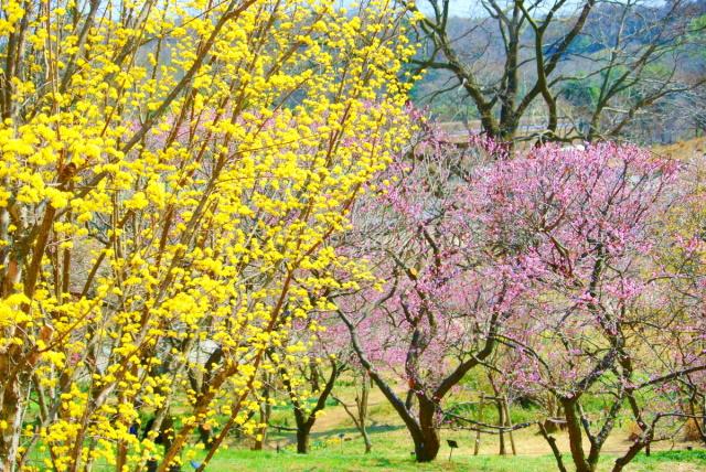 武蔵丘陵森林公園 (11)