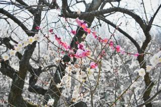武蔵丘陵森林公園 (12)