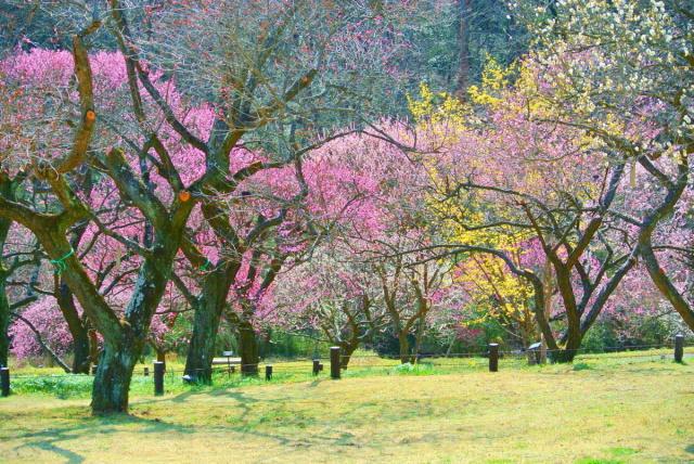武蔵丘陵森林公園 (13)
