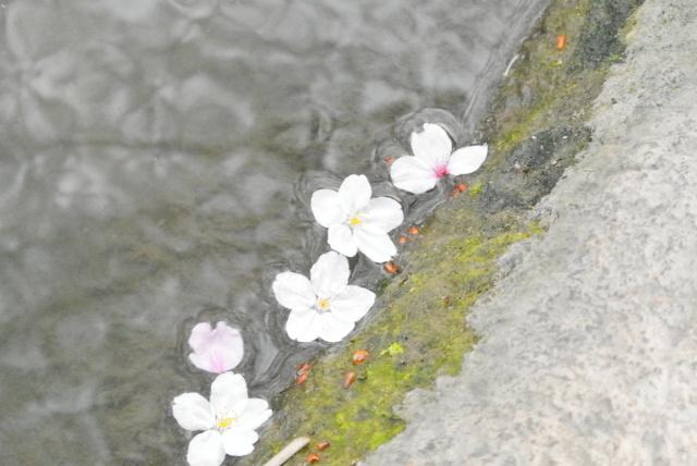 元荒川(鴻巣市) (9)