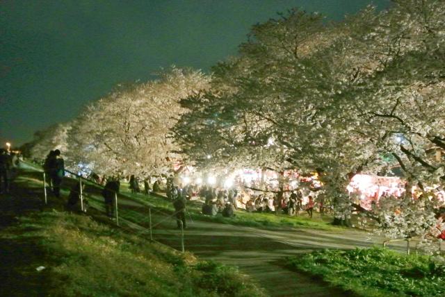 熊谷桜堤 (10)