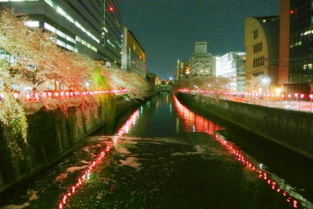 目黒川の桜 (1)