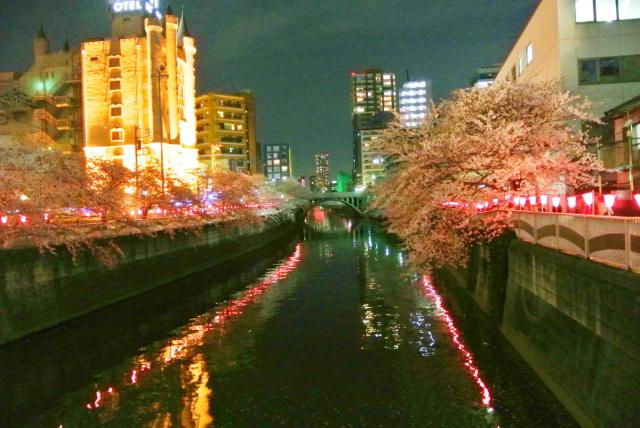 目黒川の桜 (3)