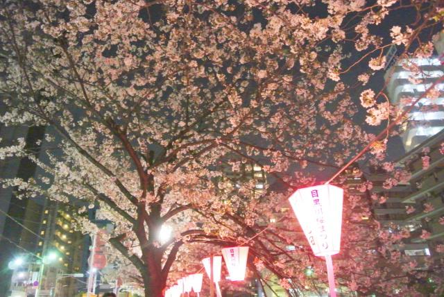 目黒川の桜 (5)