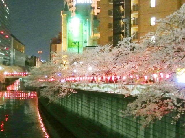 目黒川の桜 (6)
