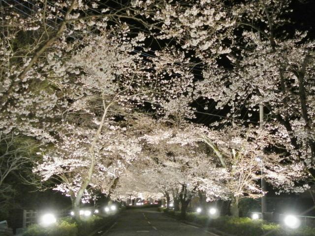 長瀞町 (2)