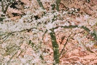 赤城の春 (6)