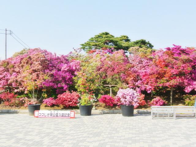 つつじが岡公園 (4)