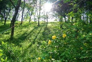 羊山公園 (1)