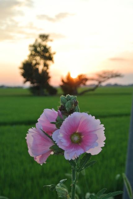 花と夕焼け