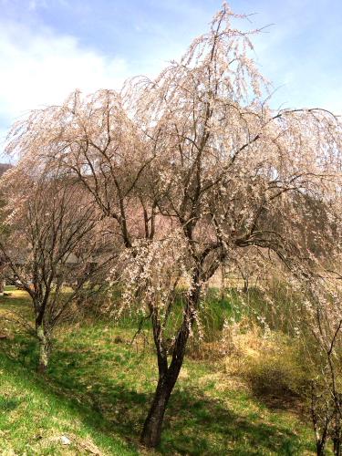 2014-05-03~05 森きち 35