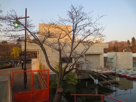 井の頭公園桜ボート乗り場脇