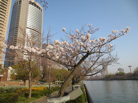 大阪帝国ホテルと桜