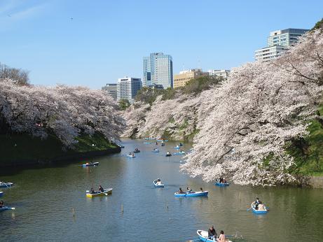 桜千鳥が淵ボート140331