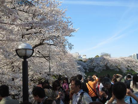 桜千鳥が淵人々140331