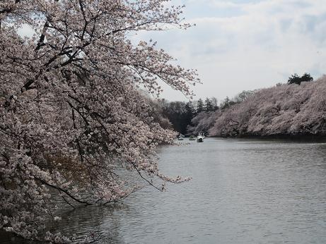 桜井の頭公園140401
