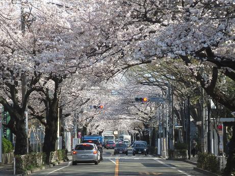 桜中央通り140331