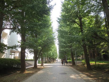東大駒場緑