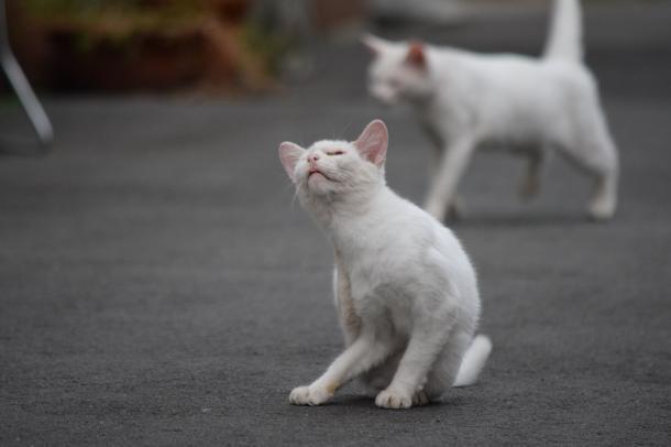 猫16,17