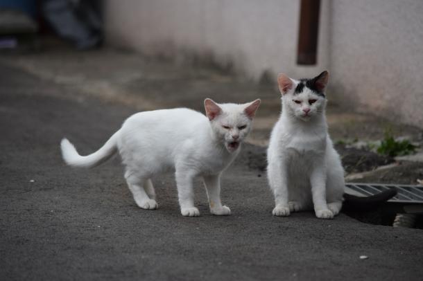 猫16,18
