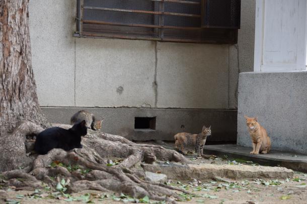 猫3,4,5,7