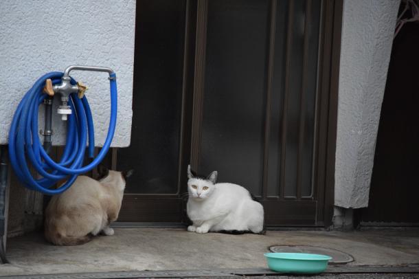 猫19.20