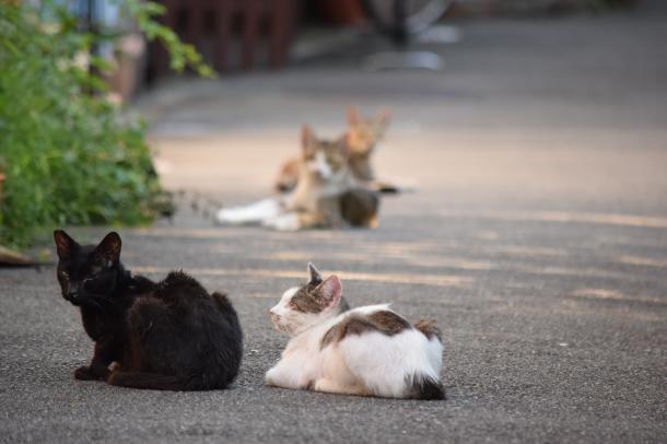 猫31,32,33,34