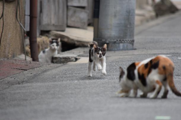 猫10,11,12