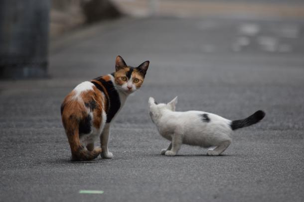 猫10,12