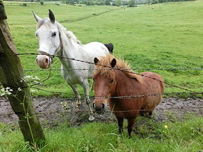 Normandy_horse04.jpg