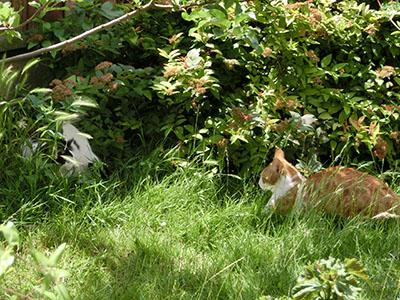 chipubcat05.jpg
