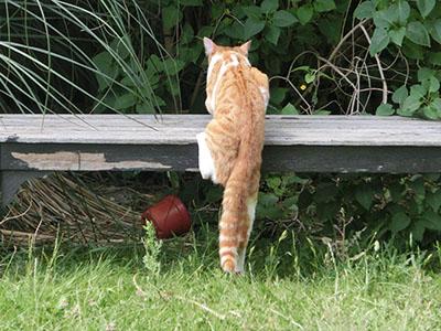 chipubcat08.jpg