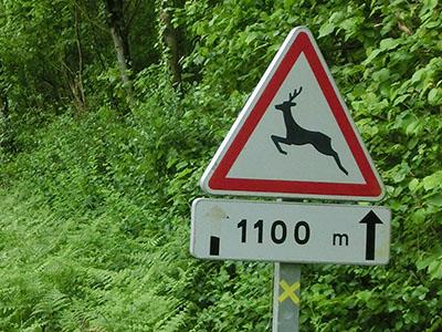 deer_sign.jpg