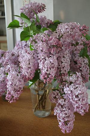 lilac01.jpg