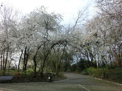spring201402.jpg
