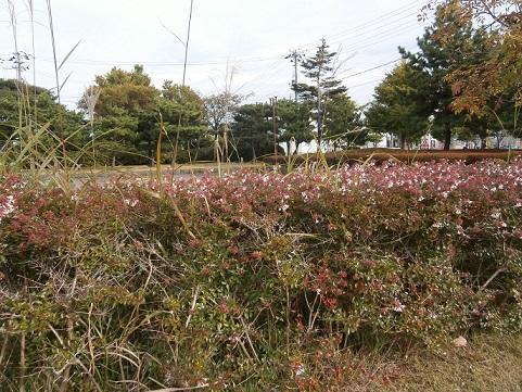 生垣の花1
