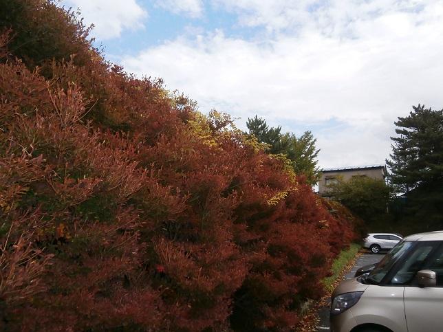 秋の様子4