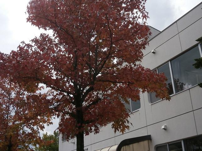 秋の様子5