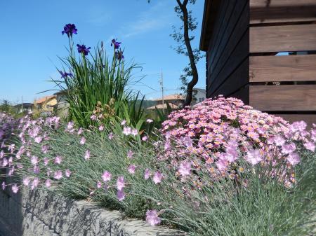 平成26年5月の花壇