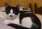 yukai14.jpg