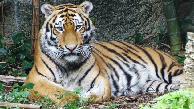 1494-zoo13.jpg