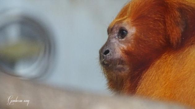 1494-zoo24.jpg